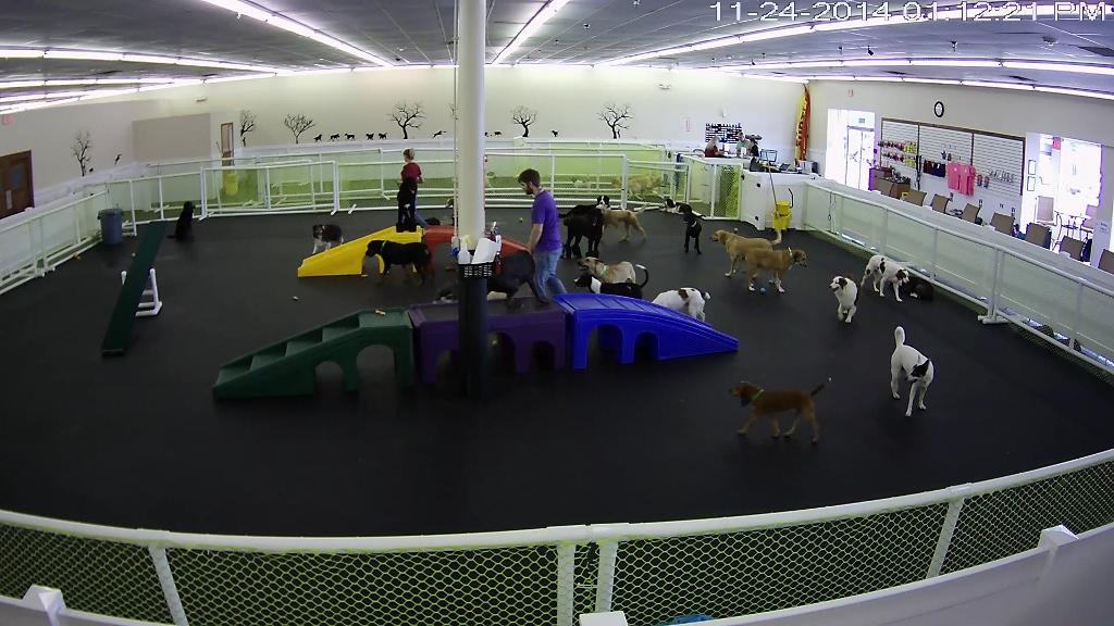 Happy Hound Dog Grooming Dog Daycare