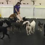 dog-daycare-inside