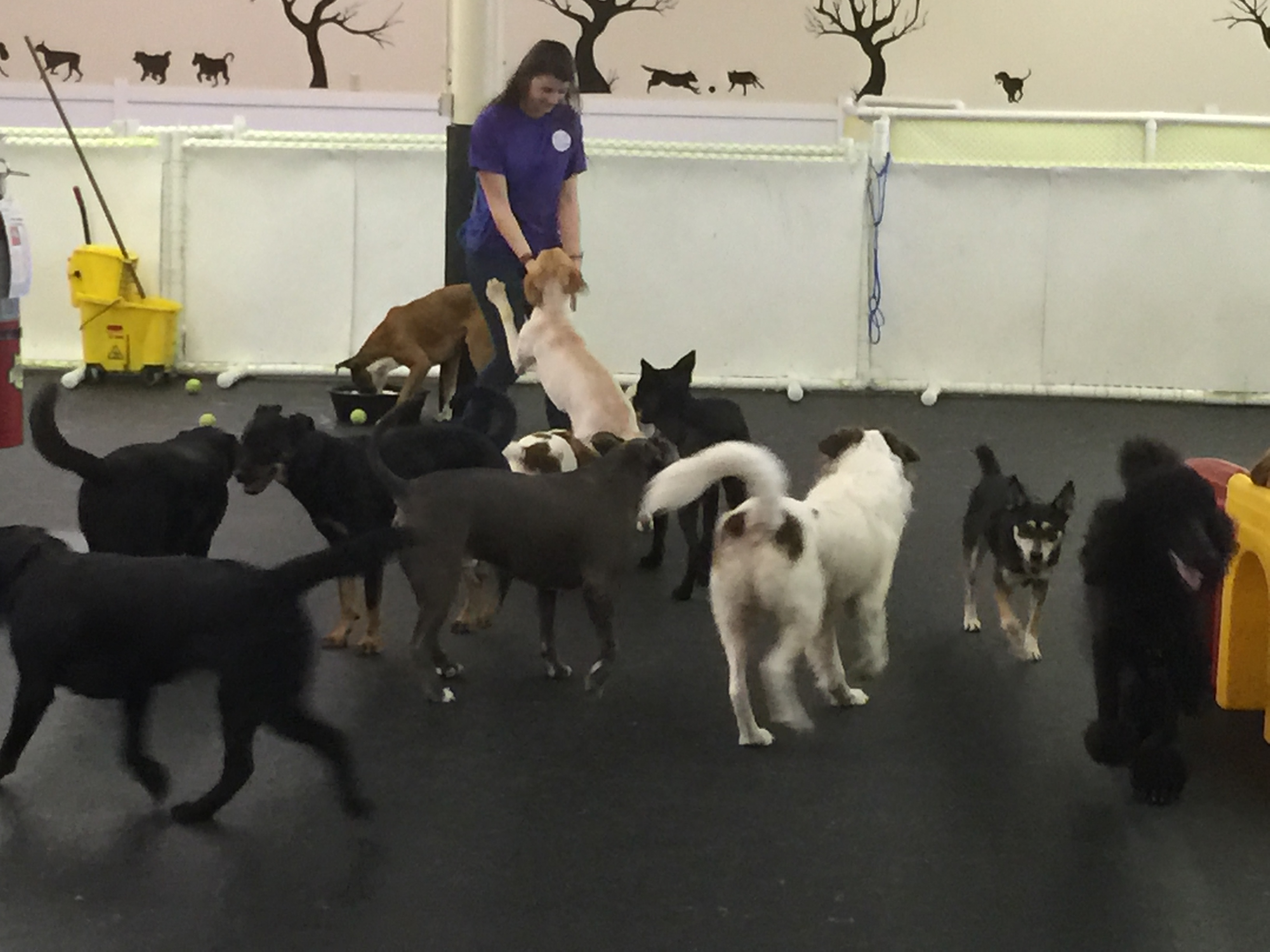 Dog daycare happy hound dog resorts for What is dog boarding