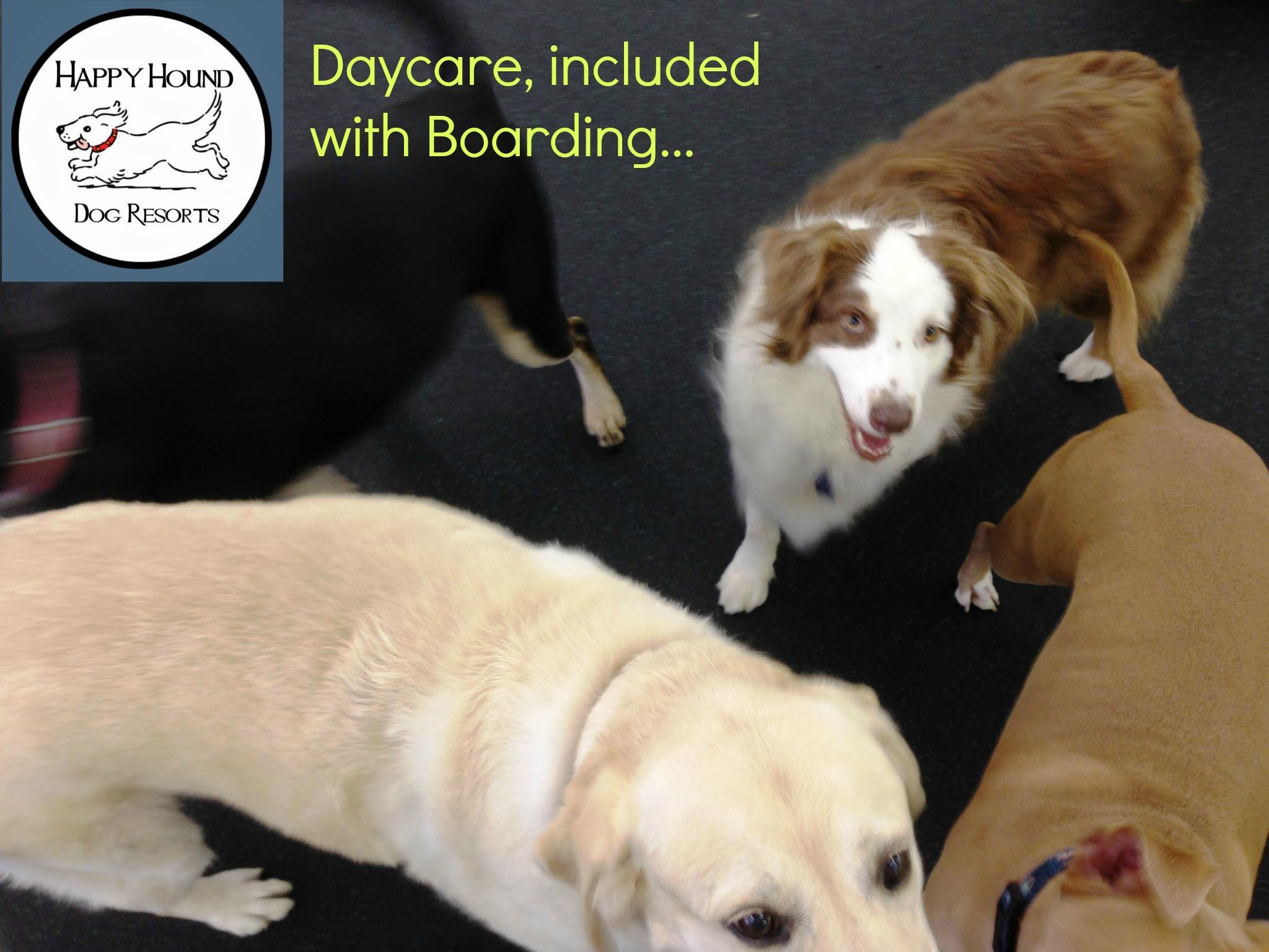 Camp Happy Hound Dog Daycare And Boarding