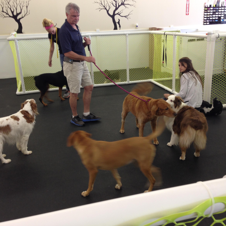 Dog Daycare What to expect | Happy Hound Dog Resorts - photo#25