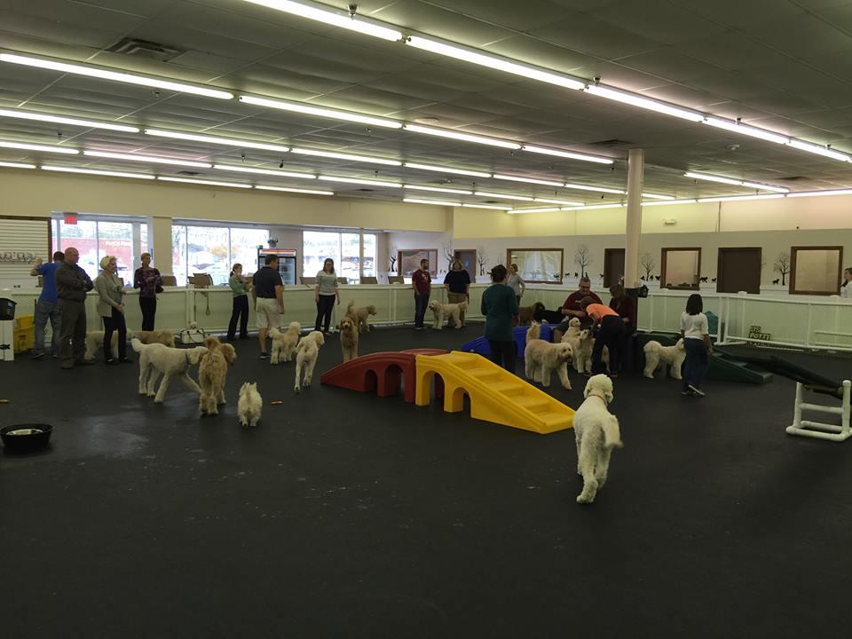 doodles dog daycare jacksonvillefl happy hound dog resorts