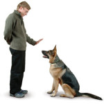 Does your Dog Daycare place use a Dog Behaviorist?