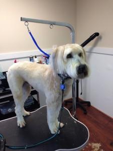 Dog Grooming Jacksonville FL