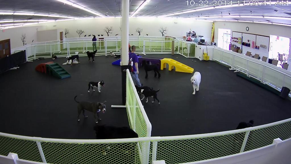 Dog Daycare Jacksonville FL