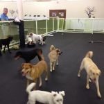 Dog Daycare What to expect