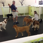 dog day care jacksonville fl