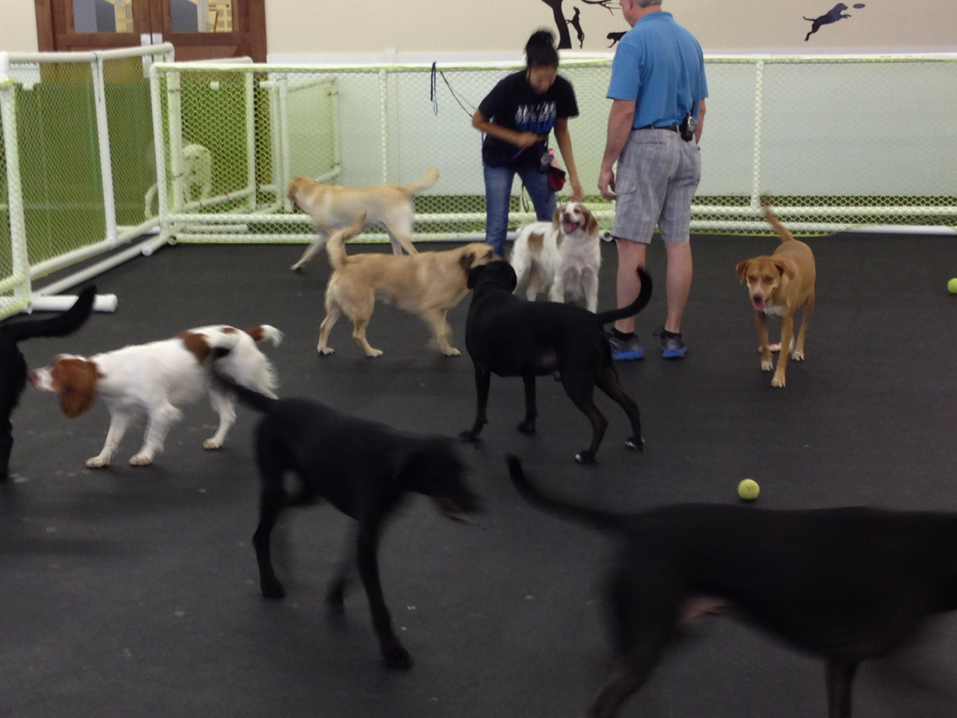 Dog daycare what to expect happy hound dog resorts for Dog boarding places near me