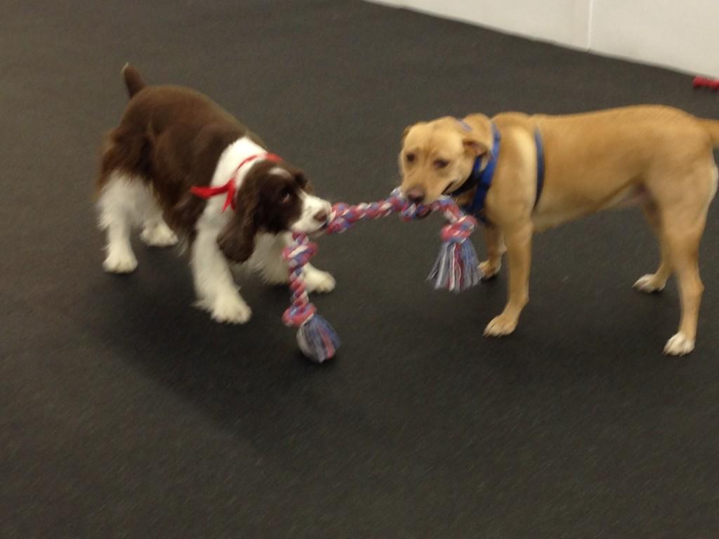 Dog Daycare inside | Happy Hound Dog Resorts - photo#8
