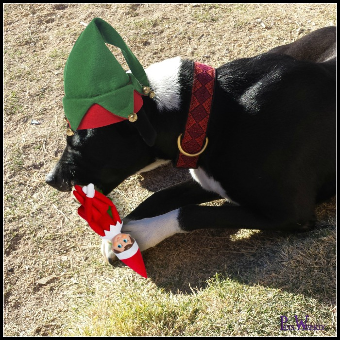 Elf On The Shelf Could Be Your Four Legged Dog This