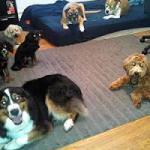 Dog Training with Larry Fine