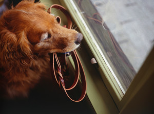 Pet Sitter versus Dog Boarding