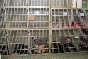 Luxury Dog Boarding Jacksonville FL at the Vet?