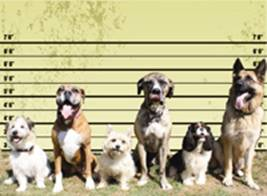 Dog Training Jacksonville FL takes time