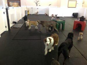 Dog Daycare Jacksonville FL inside