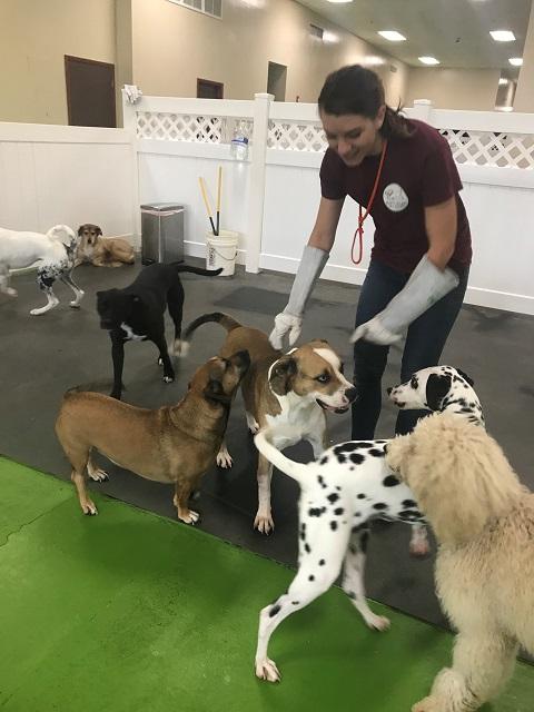 Happy Hound Dog Resorts Jacksonville FL Dog Boarding | Dog